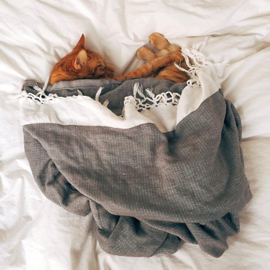 hibernate cat .jpg